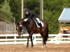 Routinier - Dressage at Lexington