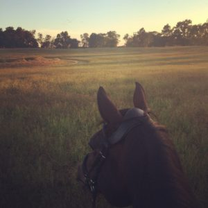 Bee trail riding at dusk