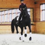 Qualia Dressage LLC